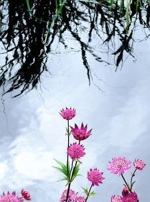 jane brocket: floral pincushions | Annie Haven | Haven Brand | Scoop.it