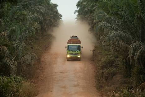 Labor Abuses Common in Palm Oil Industry | School Kitchen Gardens | Scoop.it
