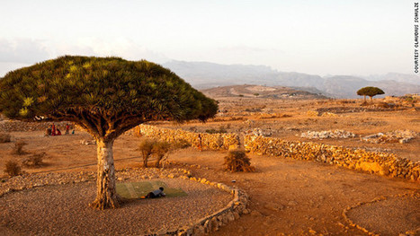 Socotra: Unspoiled island sanctuary caught on camera - CNN.com | Paupers Without Travel | Scoop.it