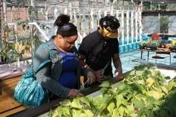 Youngstown school now offering aquaponics, growing opportunities - Farm and Dairy | Urban Aquaponics Farm | Scoop.it