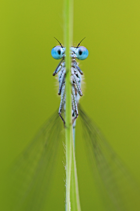 All Creatures Great and Small: Captivating Wildlife Photography by ... | creative photography | Scoop.it