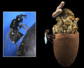 Gut Microbes Can Split a Species | www.anthouse.es | Scoop.it