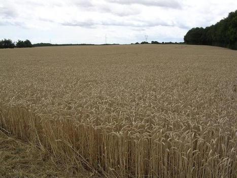 Agriculture: pourquoi des investisseurs chinois achètent-ils des terres en France ? | De la Fourche à la Fourchette (Agriculture Agroalimentaire) | Scoop.it