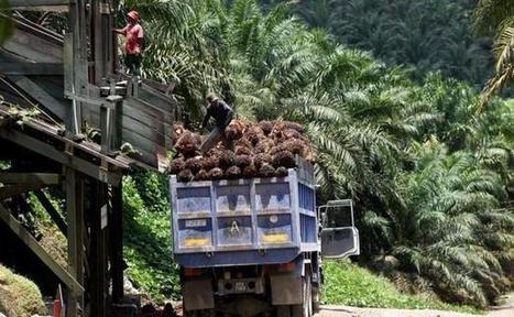 Huile de palme: les agriculteurs malaisiens écrivent à la ministre Francaise du commerce pour se plaindre | developpement durable | Scoop.it