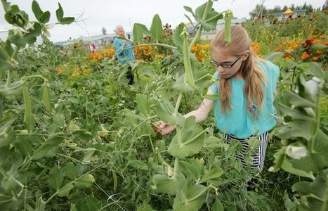 School gardens give kids a lesson in agriculture - Fairbanks Daily News-Miner | Agriculture | Scoop.it