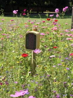 LABYRINTHE FLORAL. - Oiseaux et insectes s'approprient l'endroit ... - Le JSL | Labyrinthes pédagogiques | Scoop.it