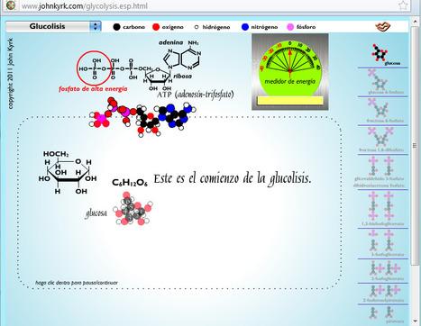Animaciones de biología celular.- | Banco de Aulas | Scoop.it