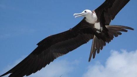 L'Université de La Rochelle prouve la contamination au mercure des oiseaux en Guyane | Biodiversité | Scoop.it