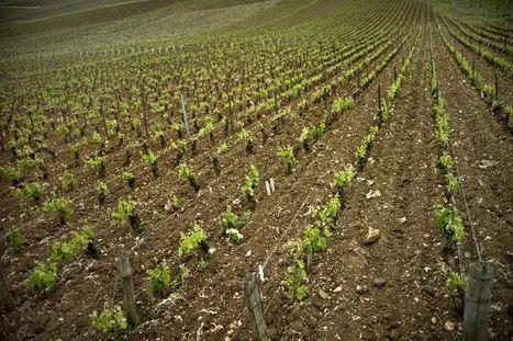 Des viticulteurs du Bordelais victimes de la grêle se disent «oubliés» | Le vin quotidien | Scoop.it