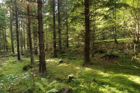 Los bosques no contribuyen, son imprescindibles.   Medio ambiente   Scoop.it