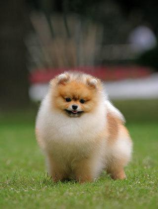 10 อันดับ สุนัขสุดฮิตล่าสุด ติดอันดับยอดนิยมของโลก | JR PLOY | Scoop.it