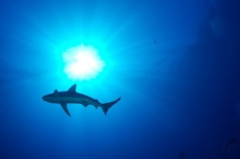 What Scientists Are Learning About Sharks in the Gulf | Hot Upcoming Events!  News!  Random Thoughts | Scoop.it