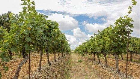 La société Vinovalie condamnée pour avoir fait du vin rosé en coupant du vin rouge avec du blanc | Le vin quotidien | Scoop.it