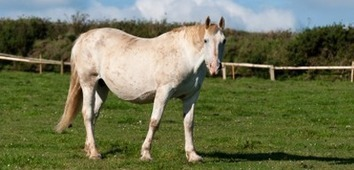 Pregnant Horse Supplements - Are They REALLY Needed? | Horse Care | Scoop.it
