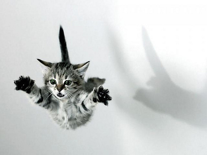 How do cats survive falls from great heights? « Science-Based Life | Feline Health and News - manhattancats.com | Scoop.it