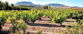 Variedades de uva (I) - Granada Hoy   Vino   Scoop.it
