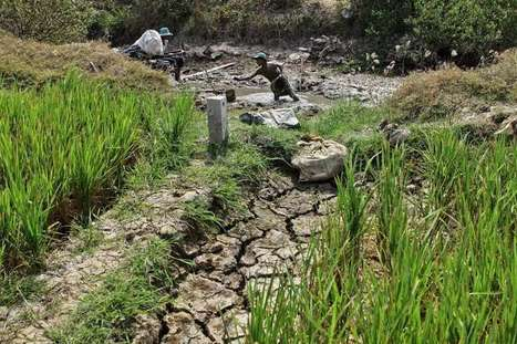 Drought exacts toll on crops in region | The Straits Times | CGIAR Climate in the News | Scoop.it