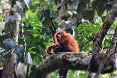Rujukan Wisata Populer di Indonesia: Serunya Berpetualang ke Taman Nasional Gunung Leuser, Yuk ! | Ahyar | Scoop.it