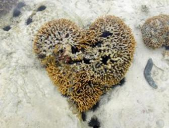 3 Ways to Love the Ocean this Valentine's Day | Indigo Scuba | Scoop.it