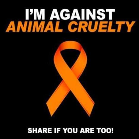 World Animal Foundation | Adgeco Group of Companies | Scoop.it