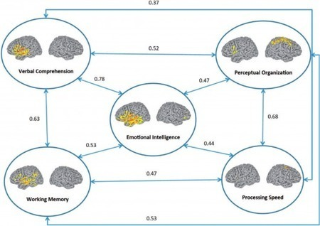 U.S. researchers map emotional intelligence of the brain | Longevity science | Scoop.it