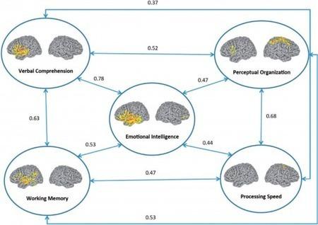 U.S. researchers map emotional intelligence of the brain | Longevity science | Scoop.it