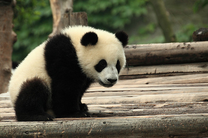 How to Survive Google's Pending Panda Update | Allround Social Media Marketing | Scoop.it