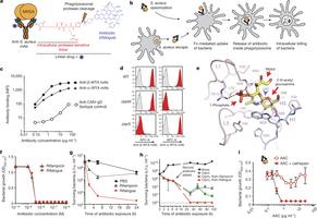 Novel antibody–antibiotic conjugate eliminates intracellular S. aureus   Horizontal gene transfert and antibiotic resistance   Scoop.it