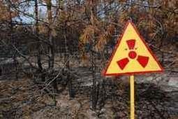 Aumenta radiactividad en bosques japoneses cercanos a Fukushima | Agua | Scoop.it