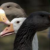 « Jamais la condition des animaux n'a été aussi misérable »   Végétarisme, alternative alimentaire   Scoop.it