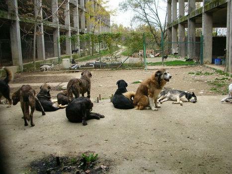 Teramo – Ottantacinque cani senza cibo dal primo gennaio: la Lega del Cane di Teramo chiede aiuto. | LEGA NAZIONALE PER LA DIFESA DEL CANE | Food for Pets | Scoop.it