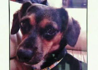 Dog stolen from woman's locked car while she grabs cup of coffee - CBS News | Retail Fuels OI | Scoop.it