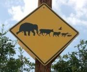 Stop the 'man swarm,' save the wild world - Grist Magazine | World Population | Scoop.it