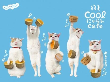 旅行日本各地的代言貓 – にゃらん Nyalan | 旅行 | Scoop.it