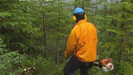 Les sylviculteurs veulent de meilleures conditions de travail - Radio-Canada   1STMGfabreguillaume   Scoop.it