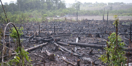 Vaste trafic de blanchiment de bois illégal au Brésil | Le Monde | The Dark Side of Brazil | Scoop.it
