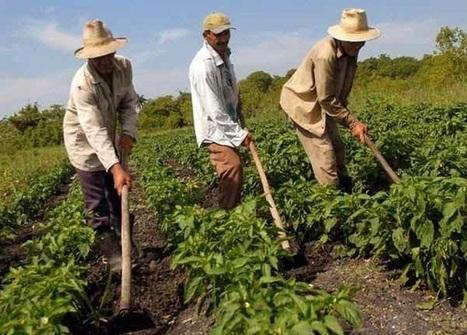 Cuba acogerá foro internacional de agricultura orgánica y ... | Agricultura Urbana de Rosario | Scoop.it