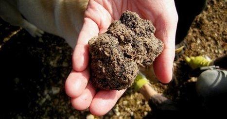 Sur la trace de la truffe en haut Quercy… | Gastronomie et alimentation pour la santé | Scoop.it