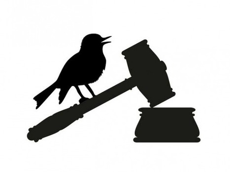 The Facebook-addicted judge and the little blue bird | Information Technologies and Political Rights | Scoop.it