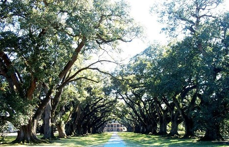 Proper pruning extends the age of trees; 300 year-old live oaks, Oak Alley, LA (CR@ Randy Cyr). | Oak Alley Plantation: Things to see! | Scoop.it