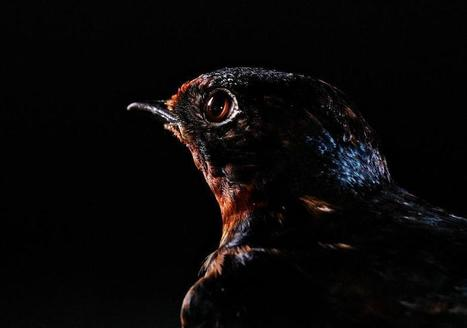 Birds Photographed Like Human Models (SLIDESHOW) - Huffington Post | All about nature | Scoop.it