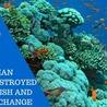 Amocean OceanScoops