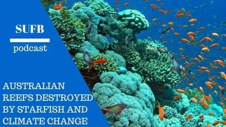 SUFB 043: Increase in Sea Star Species Threatens Coral Reefs | Amocean OceanScoops | Scoop.it