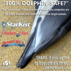 A pledge to boycott tuna products from StarKist, Bumble Bee, and Chicken of the Sea | The Wild Planet | Scoop.it