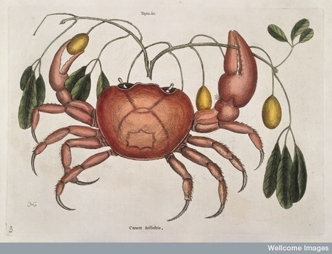 Free Technology for Teachers: Wellcome Images Releases 100,000 Images Under Creative Commons Licensing | E-scribe | Scoop.it