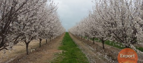 Almond Crop a quick Preview | Social Media Marketer & SEO Experts | Scoop.it