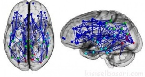 Kadın ve Erkek Beyni Farklı Mı? | Kişisel Başarı | kişisel başarı | Scoop.it