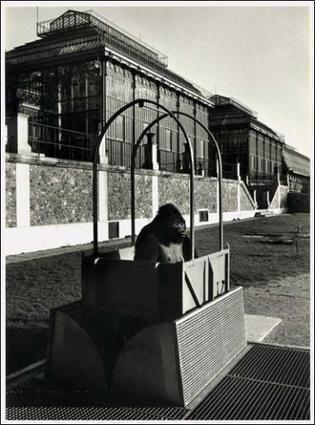 Robert Doisneau   Robert Doisneau. Un photographe au Muséum   Paris 5e. Museum d'histoire naturelle   Art contemporain, photo & multimédias   Scoop.it