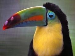 Costa Rica fecha zoológicos para 'proteger meio ambiente' | Nosso mundo, nossa vida. | Scoop.it