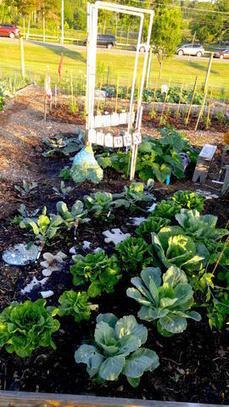 Jardins : quand la nature s'invite en ville | Nature et Biodiversité en Ville | ville et jardin | Scoop.it